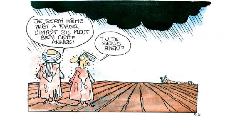 Céréales: 70 millions de quintaux sécurisés