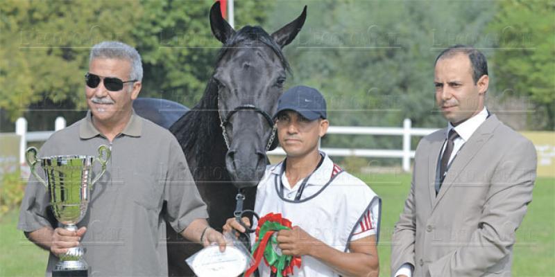 Meknès célèbre le cheval arabe-barbe