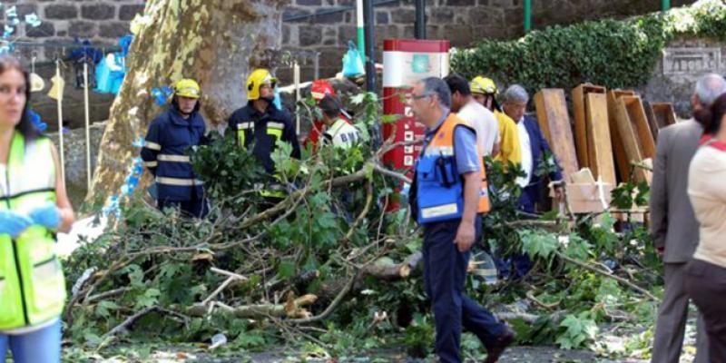 Portugal : La chute d'un arbre plusieurs morts