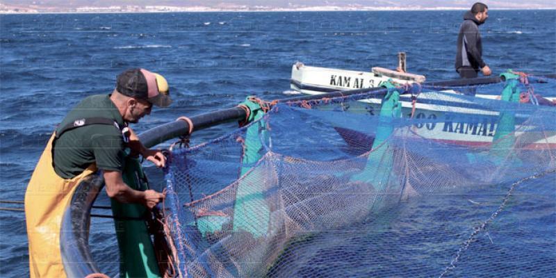Dakhla, nouveau fief de l'aquaculture