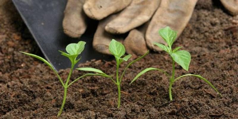 Agriculture durable: L'OCP mobilise ses troupes