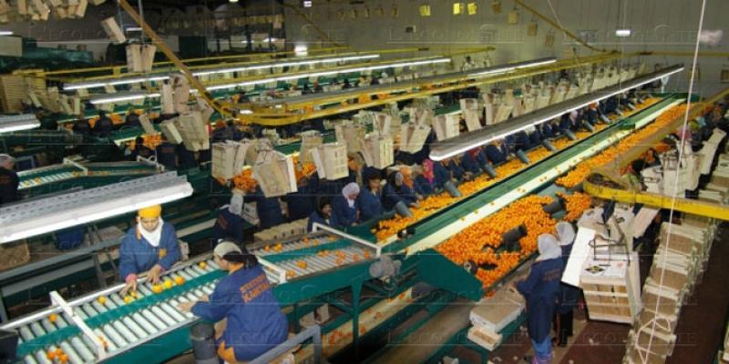 Export d'agrumes: Marchés réceptifs, offre déficitaire