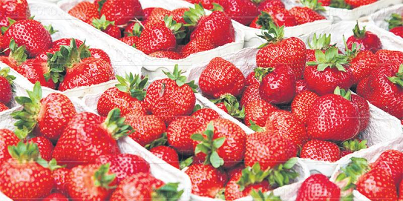 Fruits rouges dans le Nord: Un contrat-programme dans les starting-blocks