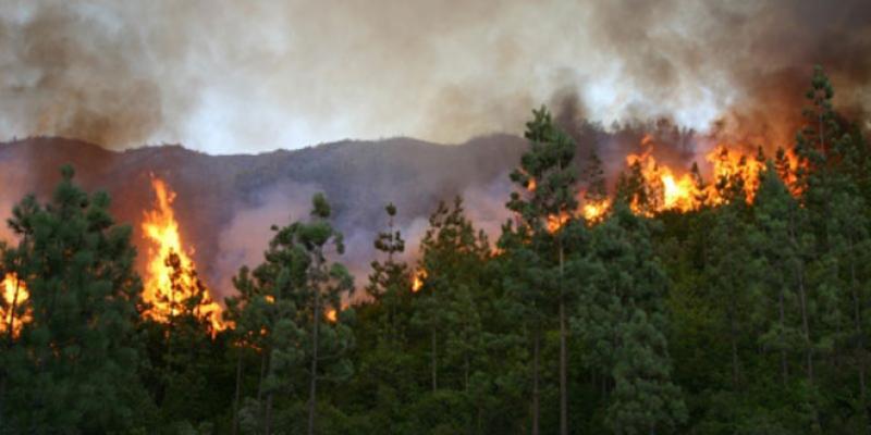 Feux de forêt: Une année moins ravageuse qu'en 2017