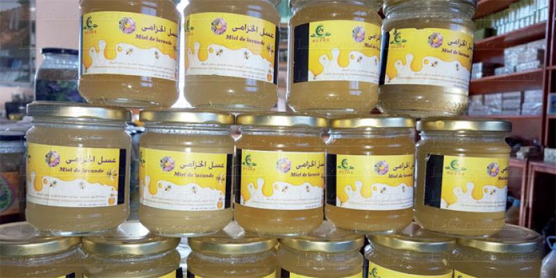 Berkane: Le miel de Béni Snassen cherche label