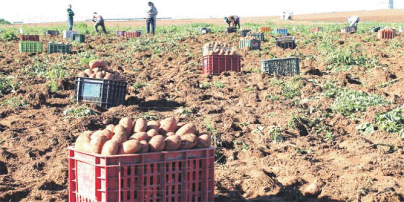 L'agriculture détruit ses emplois