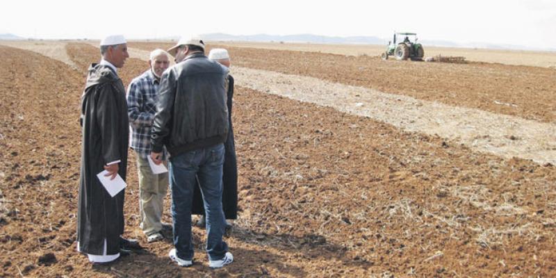 Foncier agricole: Les géomètres-topographes au coeur du processus