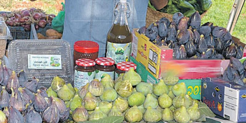 Oriental: Coup de pouce pour la culture du figuier