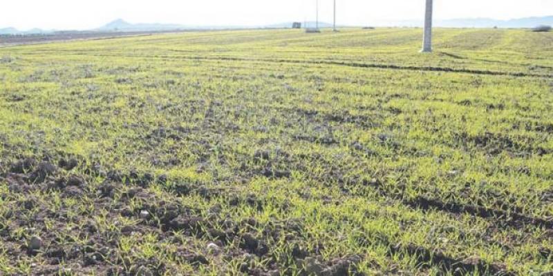Petite agriculture: Les exploitants n'ont pas les armes pour s'adapter