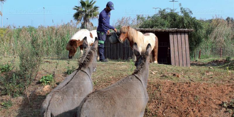 Casablanca: Le parc Sindibad diversifie son offre