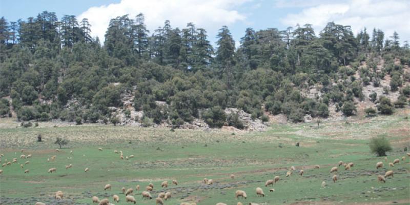 Parcs nationaux: Grave menace sur la biodiversité
