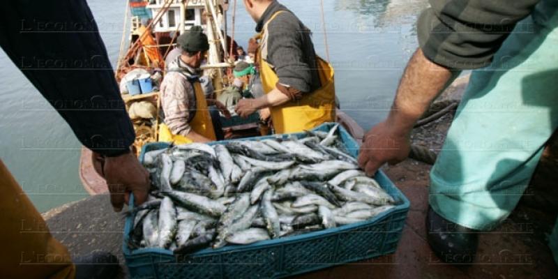 Pêche: Les volumes plafonnent à 1,3 million de tonnes