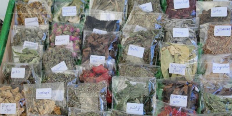 Plantes aromatiques et médicinales: Le Maroc a raté le virage