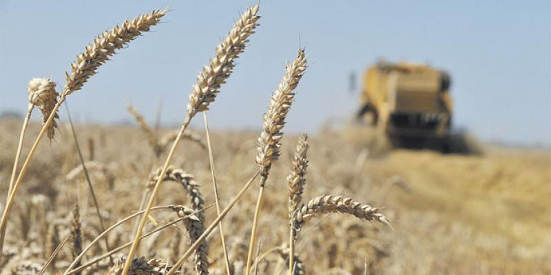 Production céréalière: La FAO revoit à la hausse ses prévisions
