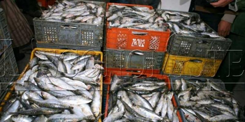 La sardine plus chère que le poulet!