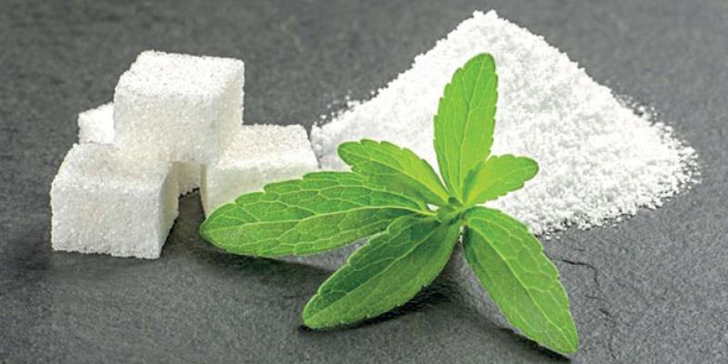 Essaouira se lance dans la production de Stevia