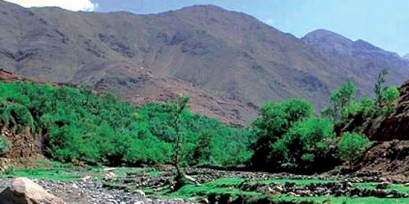 Domaine forestier: Opération «parcs et réserves» pour protéger la diversité biologique