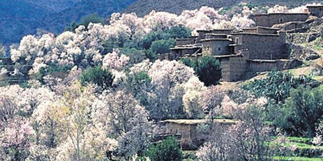 Taza : Le Plan Maroc Vert mise sur l'amande