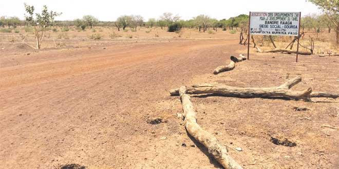 L'homme qui a stoppé le désert grâce aux termites