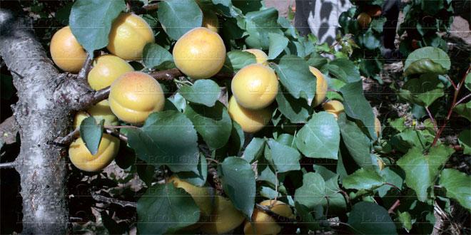abricots-065.jpg