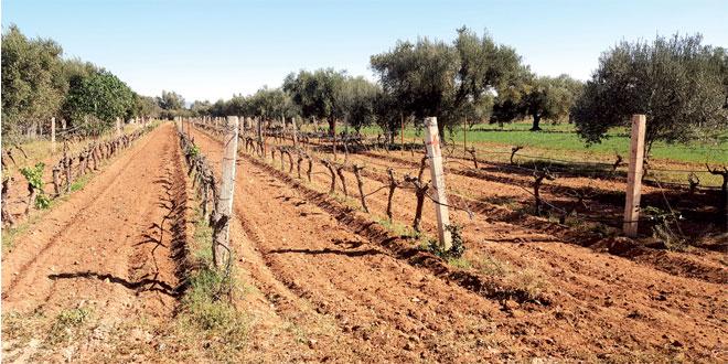 agriculture-089.jpg