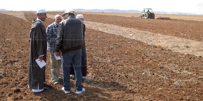 agriculture-oriental-020.jpg