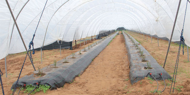 agriculture-seres-049.jpg