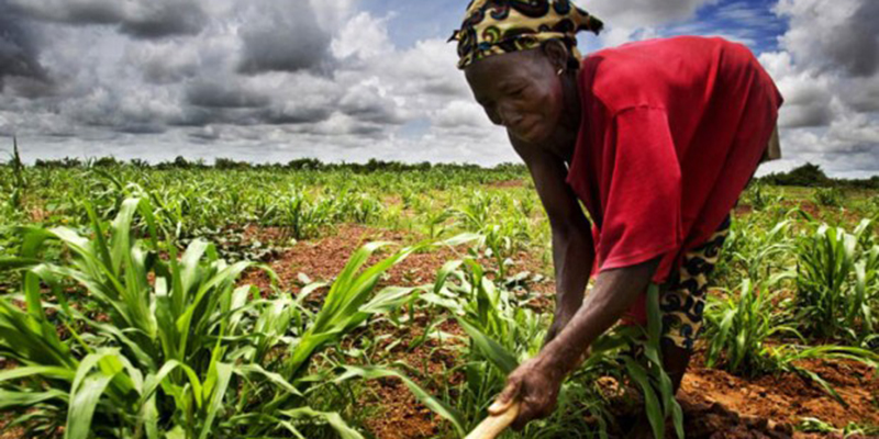 agriculture_afrique_trt.jpg