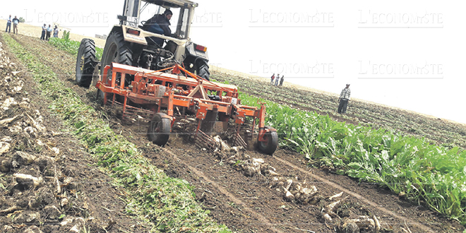agriculture_production_5542.jpg
