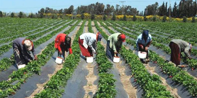 agricultures-046.jpg