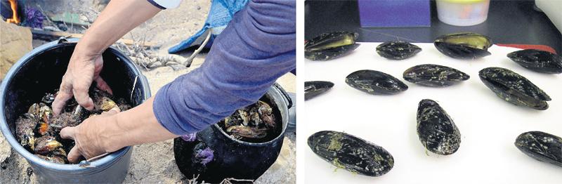 aquaculture_al_hoceima_073.jpg
