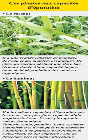 bambous_065.jpg