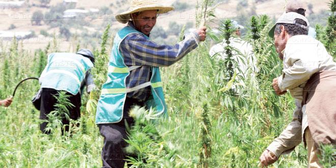 cannabis-064.jpg