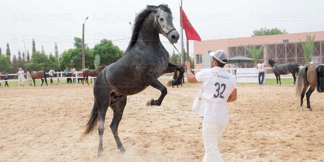 cheval-arabe-barbe-088.jpg