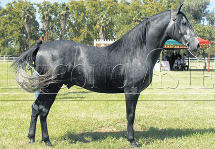 cheval_barbe_014.jpg