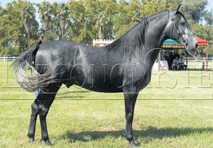cheval_barbe_014.jpg