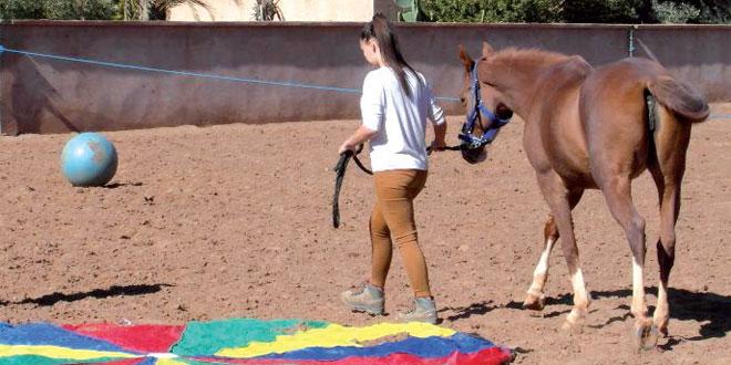 chevaux-034.jpg