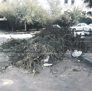 destruction_jardin_030.jpg