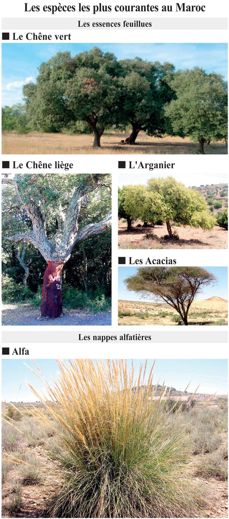 especes_arbres_034.jpg
