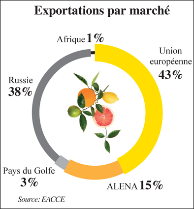 exportation_marche_agrumes_045.jpg