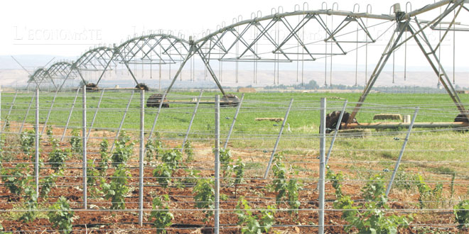 fes-meknes-agriculture-093.jpg