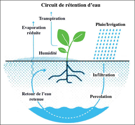 irrigation-00.jpg