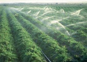 irrigation-063.jpg