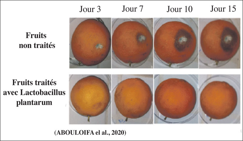 maladies-agrumes-086.jpg