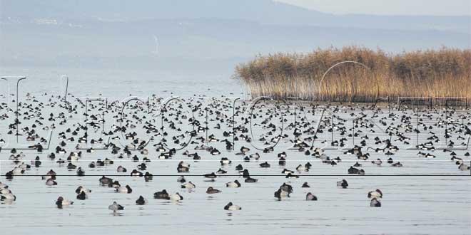 oiseau-zone-humides-3-034.jpg