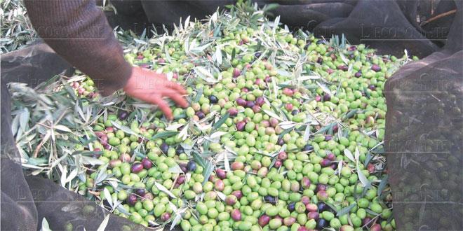 olives-015.jpg