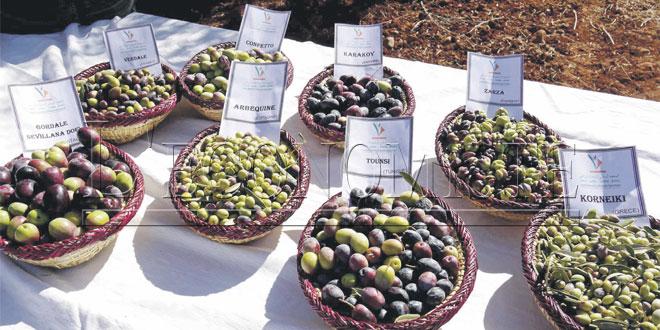 oliviers-inra-061.jpg