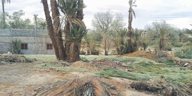 palmier-dattier-ourzazate-093.jpg