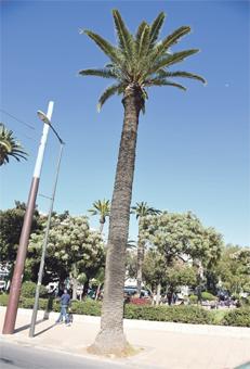 palmiers_casa_057.jpg