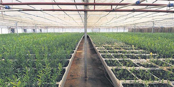pepiniere-zniber-agriculture-090.jpg
